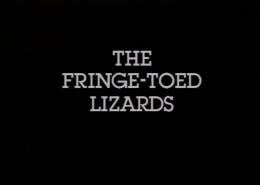 The Fringe-toed Lizards